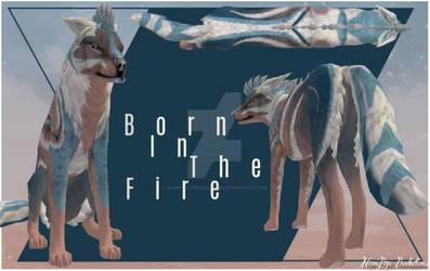 {C} BornInTheFire