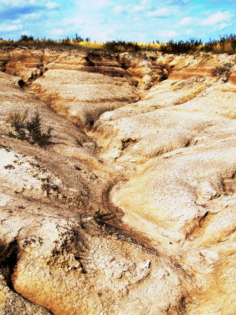 Desert Contrast by polkadotkat