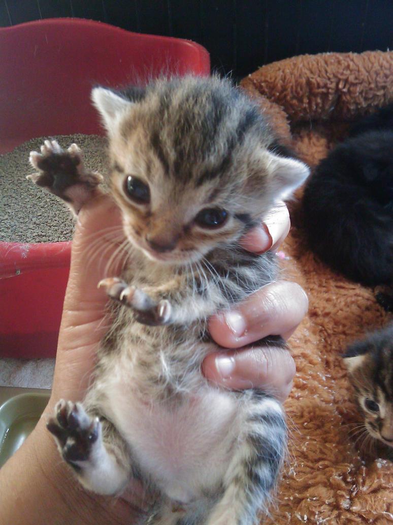 Kitten Dance by polkadotkat