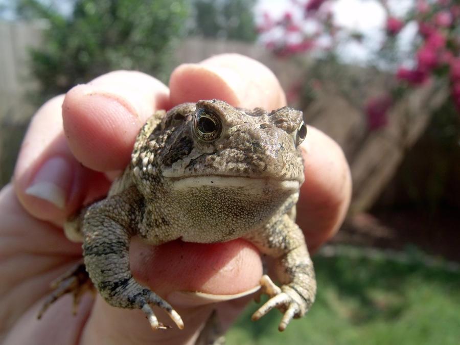 Mr.Toad by polkadotkat