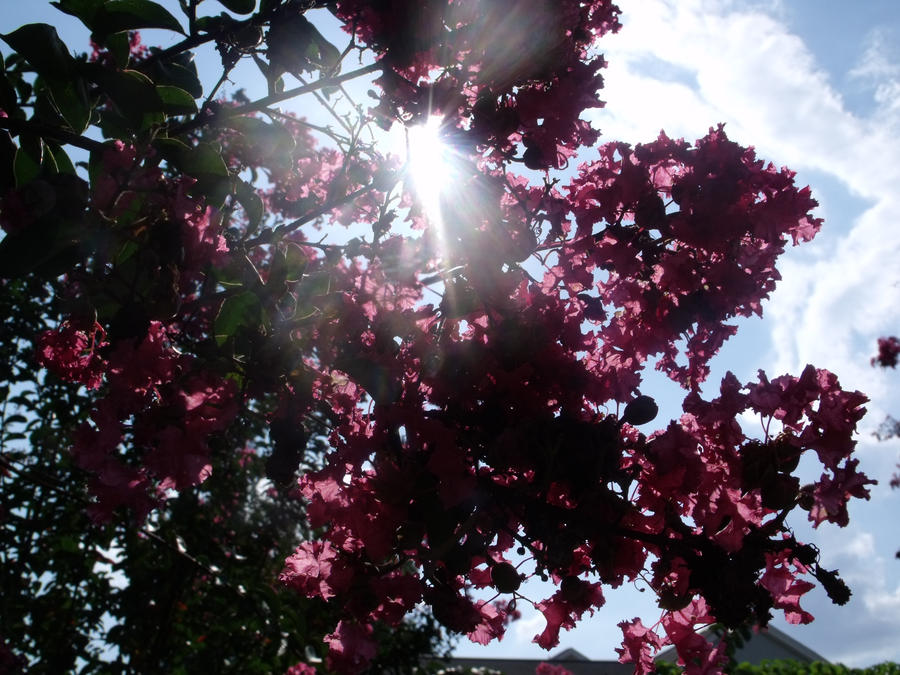 The Peeking Sun by polkadotkat