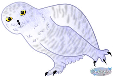 Snowy Owl by Camigirl99