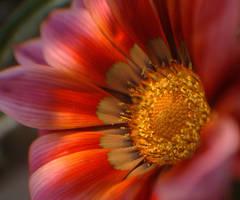 Yellow Pollen by pramit-dabadi