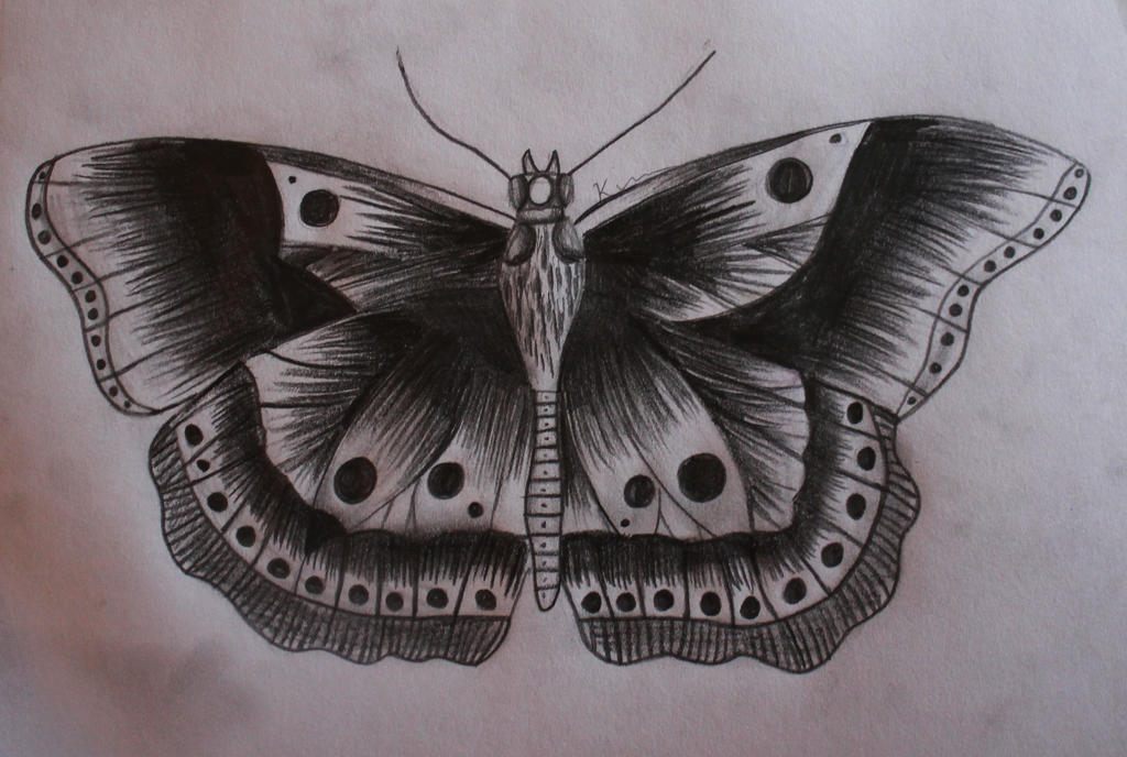 orig 21177132 harry styles butterfly tattoo harry styles gets giganticHarry Styles Bird Tattoo Drawing