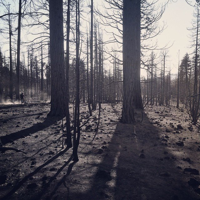 Beauty in the Aftermath of a Burn. by swampliquor