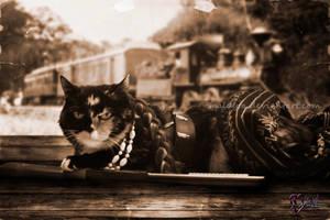 Catzlendar Noviembre-November by Maldyta
