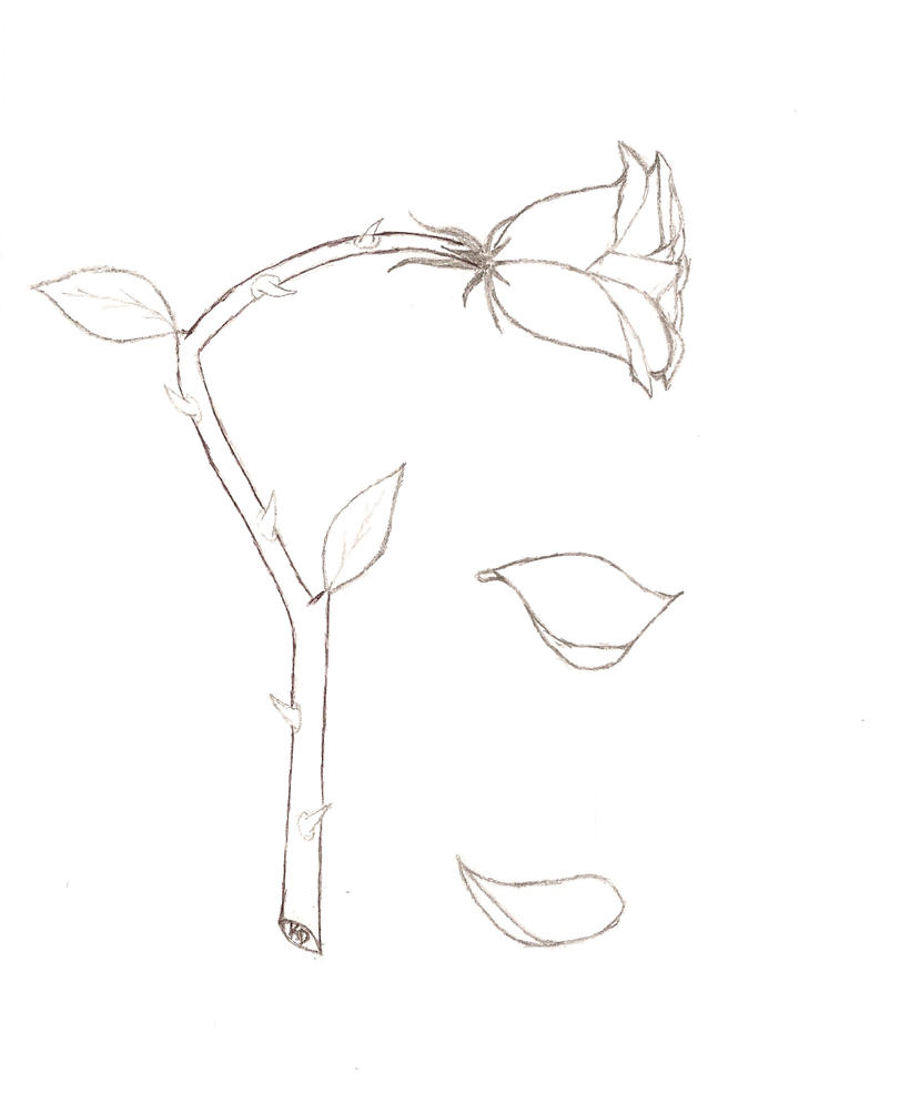 Flower Petals Line Drawing : Petals falling drawing imgkid the image kid