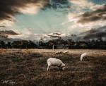 feeling sheepish by ARIANA1985