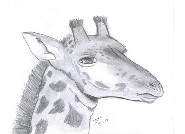 How to draw a cartoon giraffe head
