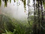 Background V - Jungle