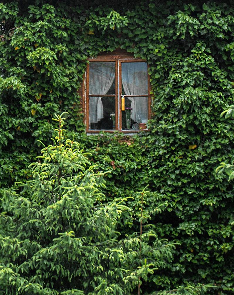 Window.... by Cipgallery