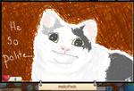 Ollie the Polite cat