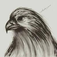 Digital Hawk sketch practice
