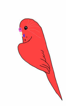 CLOSED Red Budgie adoptable