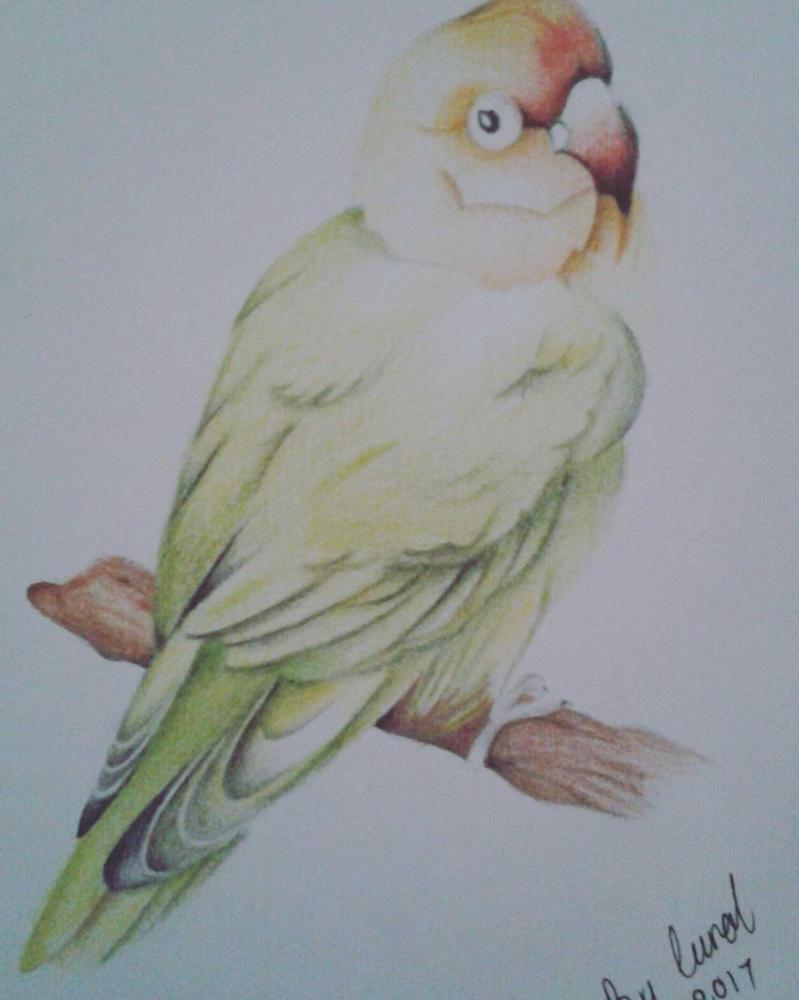 Sweet birdy.. by caytindo