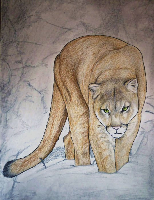 Pin Baby Cougar Images on Pinterest