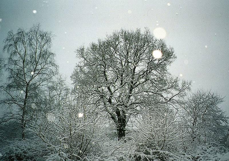the last snow by lichtdieb