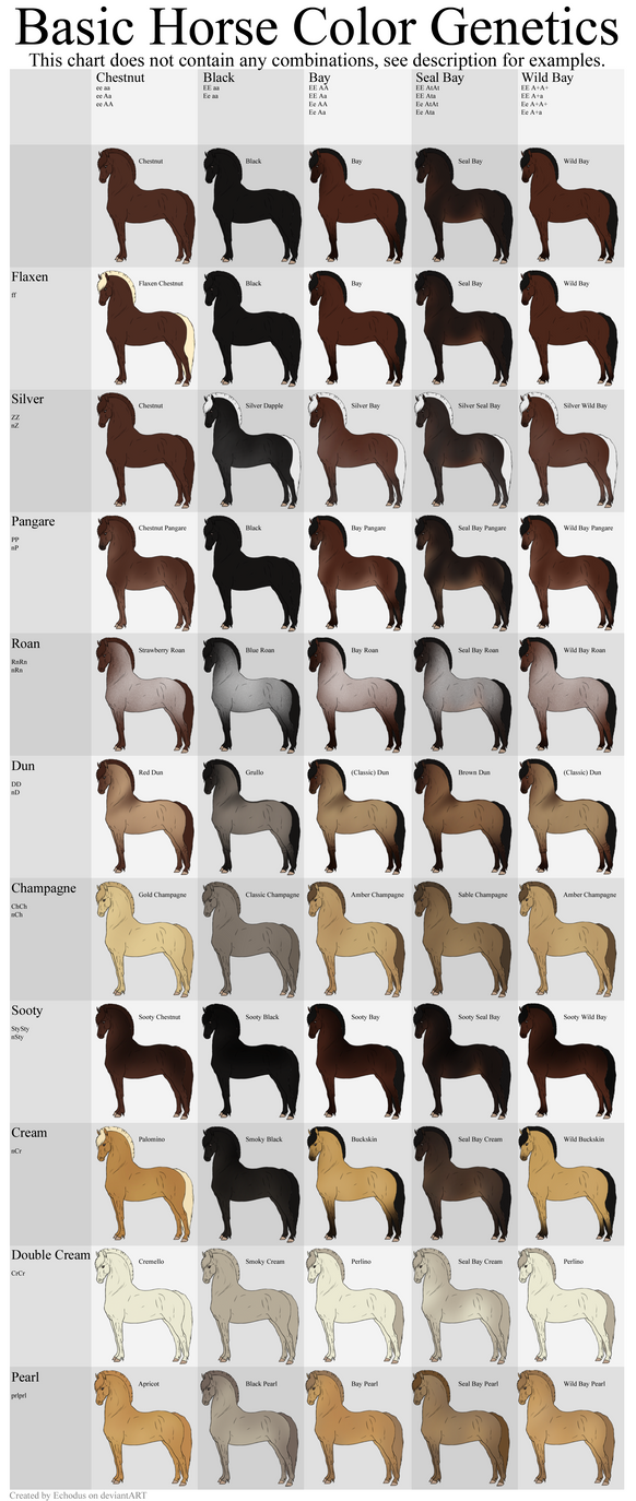 Basic Horse Color Genetics Chart by Wouv on DeviantArt