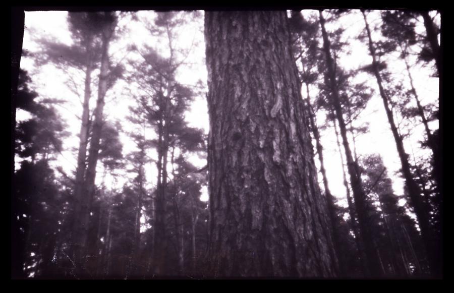 Pinhole Forest - Two by seasonaldragon1