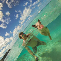 Swimming with a wild pig!