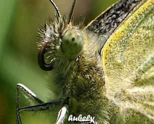 Oeildepapillon by hubely