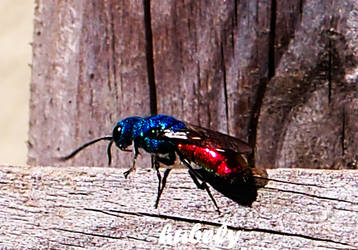 Blue-Red by hubely