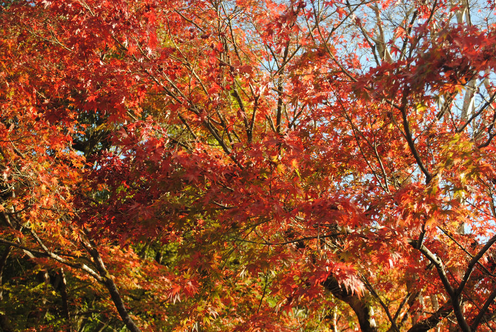 Autumn Leaves by Cairdiuil