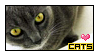 I Love Cats by StampCollectors