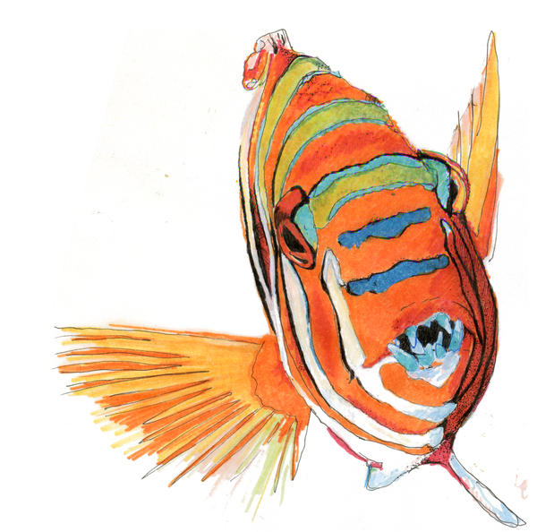 What kind of fish is this by bumblebeesloveu on deviantart for What kind of fish is this