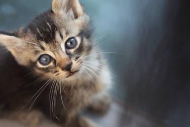 Meow 1 by amanda4quah