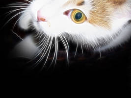 Fractal cat for Lajka 06