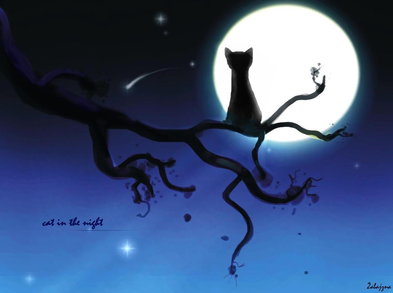 black cat in the night
