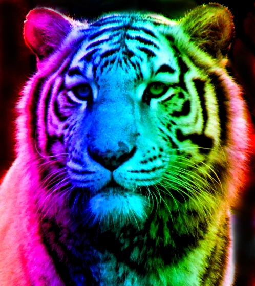 colorful leopard backgrounds artistic - photo #25