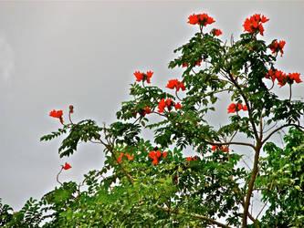 Sky Flowers by AllMusicMelody