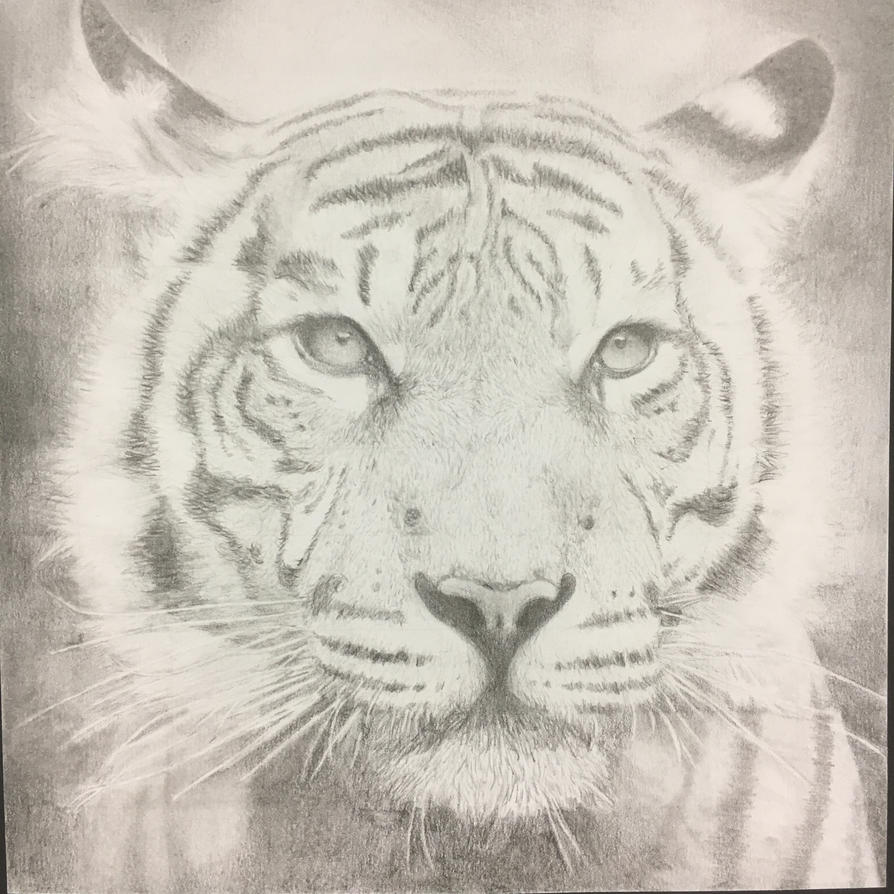 Tiger3 by muzeonline
