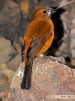 birdy by mangakasan
