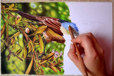 WIP sunbird