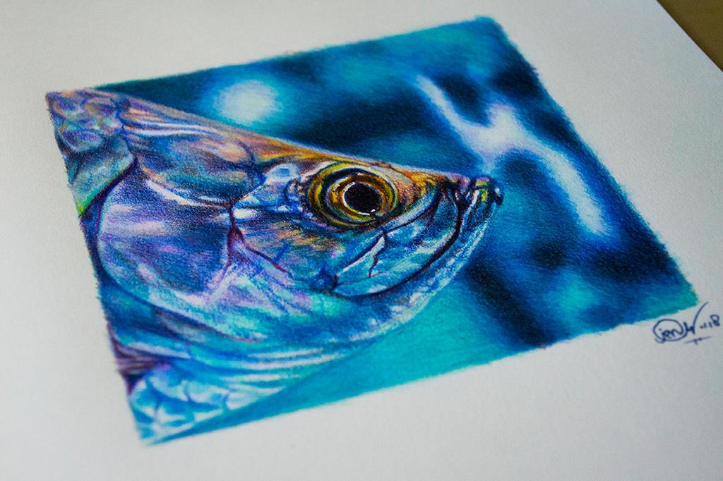 Fish study by mangakasan