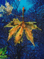 Leaves in a puddle by vandalised