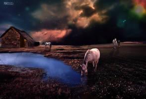 Equine passion by Marilis5604