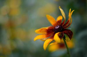 Flower by Antrisolja