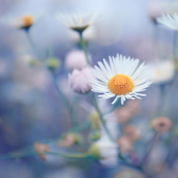 Tenderness by Antrisolja