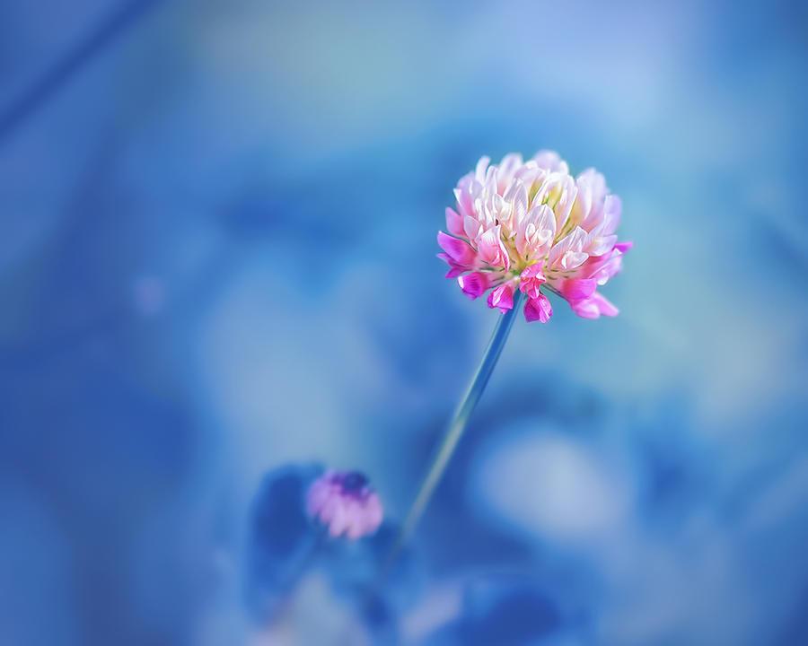 Color splash by Antrisolja