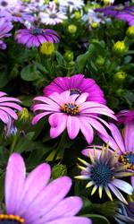 Purple Flowers II