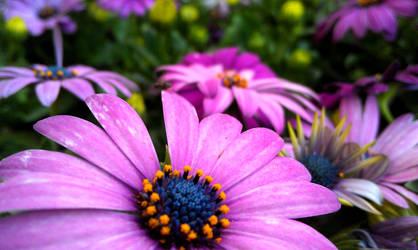 Purple Flowers III