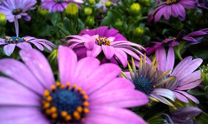 Purple Flowers IV
