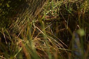 Swampy waters