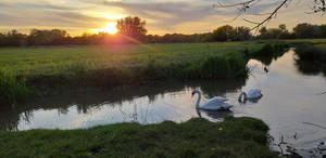 Sun Swan