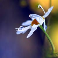 forgotten beauty by e-claude