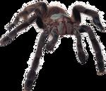 Stock 27 'Spider'